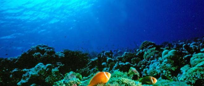Tesoros en el Fondo del Mar