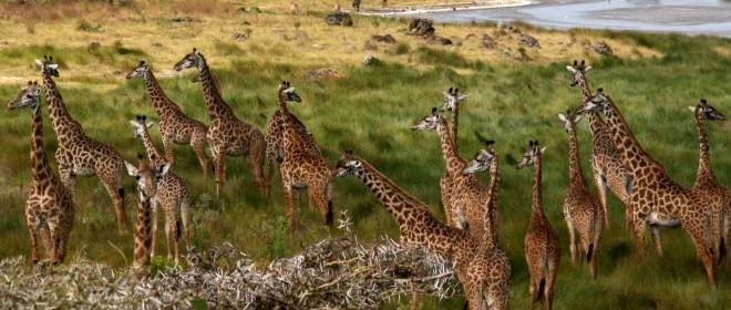 Tanzania, al otro lado del safari, con Antonio Picazo